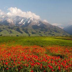 Vallée des fleurs de Kok Zhaiyk