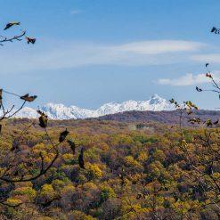 Forêt d'Arslanbob